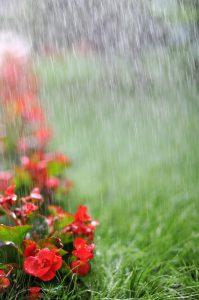 Conroe Sprinkler